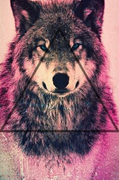 visit for more Wolf Wallpaper Hipster inspiration The post Wolf Wallpaper Hipster inspiration appeared first on wallpapers. Wallpaper Hipster, Wolf Wallpaper, Tumblr Wallpaper, Hipster Iphone Wallpapers, Dope Wallpaper Iphone, Wallpapers Android, Colorful Wallpaper, Animals And Pets, Cute Animals