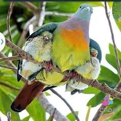 Birds Pretty Birds, Love Birds, Beautiful Birds, Animals Beautiful, Majestic Animals, Animals And Pets, Cute Animals, Baby Animals, Amazing Animal Pictures