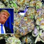 Trump Administration Signals A Possible Crackdown On States Over Marijuana
