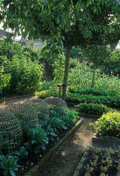 Vegetable potager kitchen garden raised bed border with metal cloches to keep animals from eating plants.