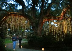 Nights of a Thousand Candles at the Brookgreen Gardens in Myrtle Beach