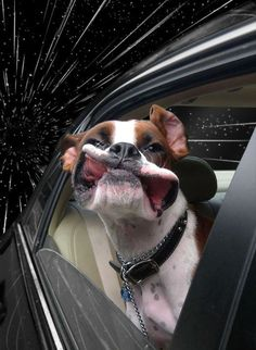 Warp Dogs: manipulated images of dogs in cars looking like they are warping thru space. Images created by Blogger and Photoshop expert Benjamin Grelle (aka The Frogman)