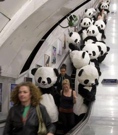 Here's something you don't see every day - an escalator filled with pandas.