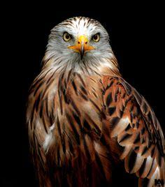 Bird of Prey by Anoop Wilson, via 500px