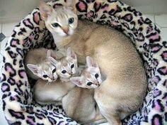Mama and kitties