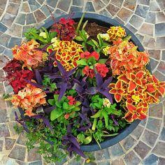 #istillloveit #growth #dubai #fadiradi #sun_after_rain #gardenlove #gardenmagic #gardendesign #diygarden #diygardendesign #Mudon_Villas #Mudon #dp #dubaistyle