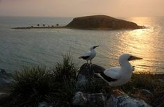 Brazil Wonders  Arquipélago dos Abrolhos - Bahia (by Turismo Bahia)