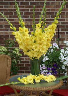 Glorious Gladiolus | Flower Bulb Crazy