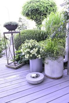 En sikker sans for indretning Container Plants, Container Gardening, Pool Landscaping, Potted Plants, Garden Inspiration, Outdoor Living, Planters, Backyard, Green
