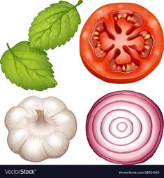 Four types of vegetables on white background Vector Image Page Borders Design, Paisley Art, Homemade Stickers, Kids Math Worksheets, Watercolor Fruit, Meal Plans To Lose Weight, Types Of Vegetables, Weights For Women, Food Drawing