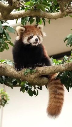 Cute Wild Animals, Pretty Animals, Super Cute Animals, Cute Little Animals, Cute Funny Animals, Animals Beautiful, Animals And Pets, Cute Cats, Cute Animal Videos