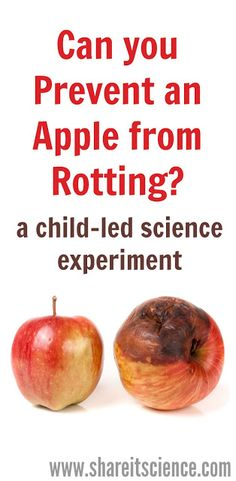 Try this easy Apple Decomposition Science Experiment. Pair it with the Zoey and Sassafras book: Monsters and Mold and you'll really get your students or kids at home thinking like a scientist! Cool Science Experiments, Easy Science, Preschool Science, Science For Kids, Food Science, Elementary Science, Teaching Science, Apple Activities, Autumn Activities For Kids