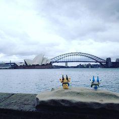 シドニーはズラ #コマさん #コマじろう #オーストラリア #旅するコマさん #旅するコマじろう #komasan #komajiro #sydney  #sydneyharbourbridge #sydneyoperahouse #australiantrip by byronsurf2002 http://ift.tt/1NRMbNv