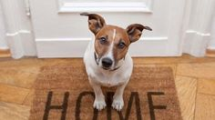 accept pets in rental housing