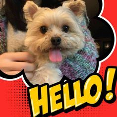 ~ Daily Dose of Cuteness ~  🐾🐶🐾😍🐾❤️🐾Beautiful 💋 (Shared by Renate Macht) #DogoftheDay http://aboutmorkies.com/ Follow us: Facebook.com/YorkiesMorkiesMaltese Twitter.com/morkienation #dog #doglovers #animals #pets #yorkies #yorkie #yorkielovers #petlovers #dogowners #puppy #adorablepets #sillydogs #smallanimals #instadogs #instayorkie #instapuppy #instaanimals #petsofinstagram #dogsofinstagram #yorkieofinstagram #puppylove #animallovers #ilovemypet #ilovemyyorkie #igdogs #igpets