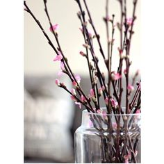 """I can't wait 'til my local flower shop brings these in...just a few more weeks. #flowerpower #springiscoming"" Spring branches"