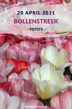 Op 20 april 2021 fietste ik opnieuw naar de Bollenstreek. De reden: tulpen rond De Zilk fotograferen. Lees je mee over mijn bezoek aan de Bollenstreek? #bollenstreek #bollenvelden #tulpen #dezilk #jtravel #jtravelblog #fotos