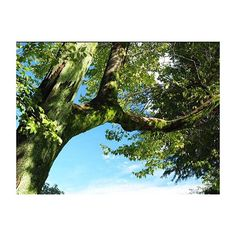 【kinow】さんのInstagramをピンしています。 《。 。 。 。 。 季節外れの初夏の公園。 吉祥寺です。 #井の頭恩賜公園 。 。 。 。 #instagood #instaphoto #tokyo #olympus #olympus倶楽部 #omdem1 #omd #em1 #ミラーレス一眼 #カメラ男子 #オリンパス #カメラ好きな人と繋がりたい #カメラ #japan #mft #マイクロフォーサーズ #tokyocameraclub #東京カメラ倶楽部 #カメラ散歩 #instagood #igで繋がりたい #人生 #言葉 #伝えたいこと #蒼の世界 #青の世界 #ファインダー越しのわたしの世界 #公園 #森 #forest》
