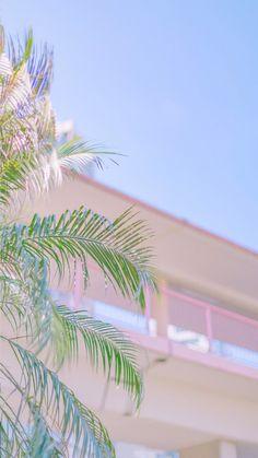Bts Wallpaper Iphone Backgrounds Pink 56 Ideas For 2019 Iphone Backgrounds Tumblr, Tumblr Wallpaper, Pink Wallpaper, Wallpaper Backgrounds, Bts Wallpaper, Flower Wallpaper, Aesthetic Pastel Wallpaper, Aesthetic Backgrounds, Aesthetic Wallpapers