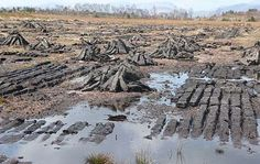 How can we be certain that ancient bodies found in Ireland's peat bogs were the result of human sacrifice?