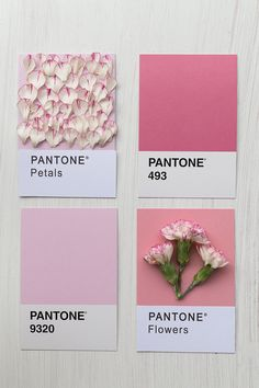 Imagem de pink, flowers, and pantone Pinterest Instagram, Pantone Color, Pantone Shade Card, Color Theory, My Favorite Color, Color Inspiration, Pretty In Pink, Pastel Pink, Colour Board