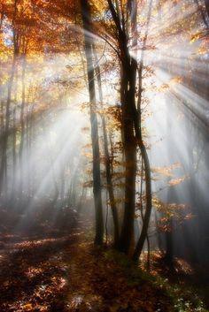 Light by Kristjan Rems. More #nature pics at www.freecomputerdesktopwallpaper.com/wplacessix.shtml
