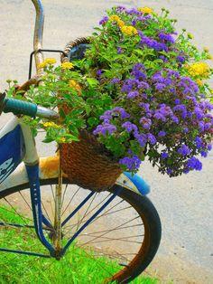 Flowers in a bike basket. Flower Planters, Garden Planters, Garden Art, Garden Whimsy, Bicycle Basket, Bicycle Art, Bike Baskets, Bike Planter, Container Gardening