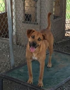 STILL AVAILABLE 8/22/16 ~ URGENT - Meet LIBERTY who is at Lewisburg Animal Shelter in Lewisburg, TN - ADOPT OR FOSTER …