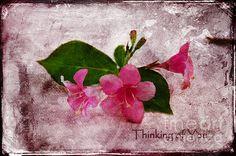 """Blossom"" Greeting Card - by Randi Grace Nilsberg"
