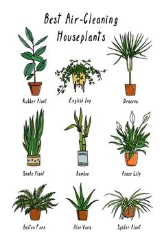 That Help Purify & Clean the Air Plants That Help Purify & Clean the Air Plants that help purify & clean the air, naturally! Plants That Help Purify & Clean the Air Plants that help purify & clean the air, naturally! Plantas Indoor, Air Cleaning Plants, Indoor Plants Clean Air, Plants That Clean Air, Indoor Cactus, Cactus Plants, Best Indoor Plants, Cactus Art, Nature Plants