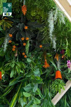 RHS Chelsea Flower Show - Fresh Garden - The World Vision Garden World Vision John Warland