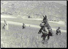 """En 1958, un légionnaire de la """"13″ (13e Demi-brigade de Légion étrangère) en opérations trouve un âne mourrant de faim dans le djebel. Le légionnaire le ramène à la base et la bête devient la mascotte de l'unité sous le nom de """"Bambi"""".    In 1958, a legionary of """"13"""" (13th Demi-Brigade of Foreign Legion) in operations found a donkey starving in the Jebel. The legionnaire brought him back to the base and the animal became the mascot of the unit under the name """"Bambi""""."""