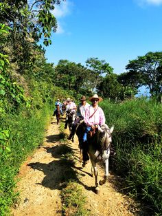 Ride on a horseback and Eco-hike through the cloud forest of Antioquia's Southwest. The Southwest of Antioquia – full of green valleys, mountains and rivers – represents one of the most beautiful Colombian regions. Far from mass tourism, it is one of the major coffee growing regions in the country. #travelandmakeadifference #horseback #horse #travel #activity #outdoors #tradition #nature #sustainability #ecotourism