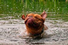 perro bañandose