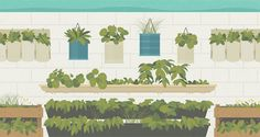 Want to multiply the number of plants you can grow in a garden or on a  patio or deck? Grow up! Vertical gardening, a technique to cultivate plants  up surfaces or supports, is the perfect way to squeeze lots of plants into  a small space. Growing up, rather than out, offers countless other benefits  beyond higher plant yields.