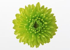 Free Online Games Categories and Tags Send Flowers, Blooming Flowers, Green Flowers, Wedding Flowers, Gift Flowers, Biscuit, Cartoon Flowers, Floral Border, Flower Pictures