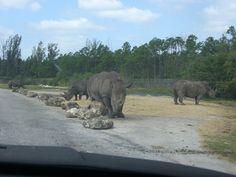 Drive thru safari, West Palm Beach, Florida