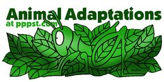 Animal Adaptations - FREE presentations in PowerPoint format, interactive activities, lessons for K-12