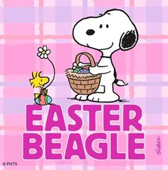 """""""Greetings from the Easter Beagle on Easter Sunday! Snoopy Watch, Snoopy Comics, Happy Gif, Here Comes Peter Cottontail, Simons Cat, Charlie Brown And Snoopy, Easter Celebration, Peanuts Snoopy, Easter Treats"""