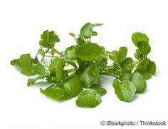 Learn more about watercress nutrition facts, health benefits, healthy recipes, and other fun facts to enrich your diet. http://foodfacts.mercola.com/watercress.html