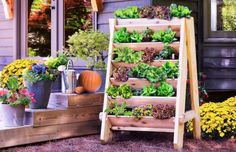 DIY Herb Wall Planter Is A Super Easy Project