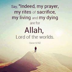 #Salaah