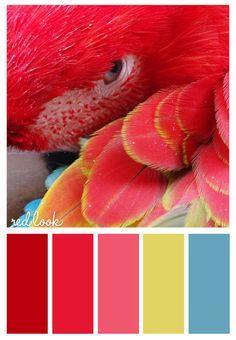 paleta natural - vermelho, rosa, amarelo, azul