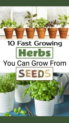 Growing Herbs, Growing Vegetables, Fast Growing, Hydroponic Gardening, Container Gardening, Gardening Tips, Hydroponics, Farm Gardens, Outdoor Gardens