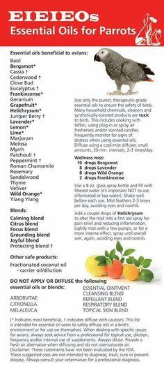 Essential oils list for parrot Parrot Pet, Parrot Toys, Parrot Bird, Parrot Chop, Budgies, Parrots, Are Essential Oils Safe, African Grey Parrot, Bird Toys