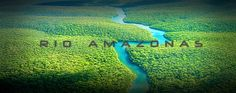"Instituto Manquehue - ""Nos quedamos todos atónitos"": Descubren un gran tesoro natural en las profundidades del Amazonas"