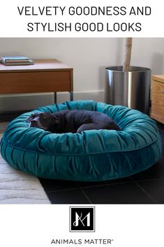 Dog Company Ali Donut Turquoise by Animals Matter Training Your Dog, Training Collar, Training Pads, Agility Training, Training Classes, Dog Agility, Training Videos, Training Equipment, Training Academy
