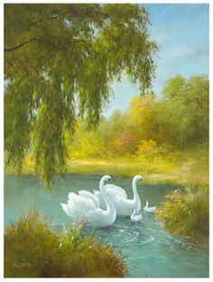 Art Print: White Symphony Art Print by Brian Smyth by Brian Smyth : Bird Pictures, Pictures To Paint, Nature Pictures, Scenery Paintings, Landscape Paintings, Image Fruit, Swan Painting, Flower Artists, Images Vintage