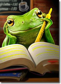 Frog Studying Funny Graduation Card - Greeting Card by Avanti Press