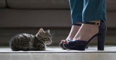 kitten and heels